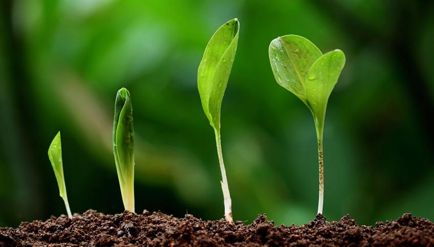 Ce însemană mediu de creștere și ce ești dispus să faci pentru a-l avea - Crafting Minds